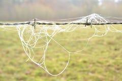 Stacheldraht mit dem bereiften Haar und bereiftem Spinnennetz Stockbilder