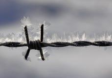 Stacheldraht mit Eiskristallen Stockbilder