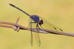 Stacheldraht und eine Libelle Lizenzfreies Stockbild