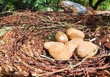 Stacheldraht und Felsen: Das Nest des Vogels stockbild