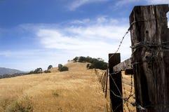 Stacheldraht-Zaun und goldenes Gras Stockfotos