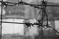 Stacheldrahtknoten auf einem grauen Hintergrund stockfotografie