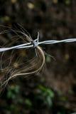 Stacheldrahtzaun mit dem Hereford-Vieh-Haar Lizenzfreies Stockfoto