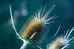Stachelige Blume stockbild