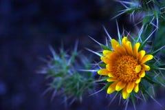 Stachelige Blume Stockbilder
