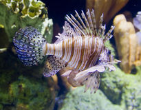 Stachelige Fische Stockfotos