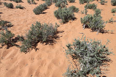 Stachelige Vegetation Lizenzfreies Stockfoto