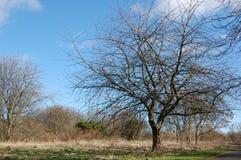 Stacheliger Baum Lizenzfreie Stockfotografie
