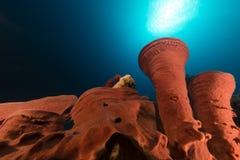 Stacheliger Gefäßschwamm und tropisches Riff im Roten Meer. Lizenzfreie Stockfotos