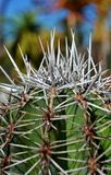 Stacheliger Kaktus Lizenzfreies Stockfoto
