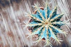 Stacheliger Kaktus auf hölzernem Hintergrund, Draufsicht Blaugrüner Kaktus mit gelben langen Nadeln Flache Lage Nahaufnahme, Kopi stockbilder