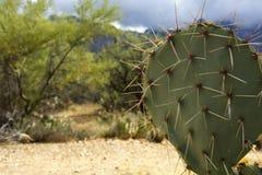 Stacheliger Kaktusabschluß oben Stockbild