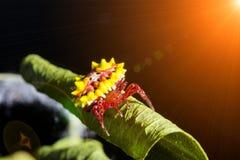 Stacheliger Kugelweber und Unschärfeweißspinnennetz stockbilder