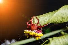 Stacheliger Kugelweber und Unschärfeweißspinnennetz lizenzfreie stockbilder