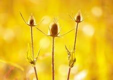 Stacheliges Gras in den letzten Strahlen des Sun Lizenzfreies Stockfoto