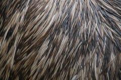 Stachelschweinkörper mit Dornen - Hintergrund Lizenzfreie Stockbilder