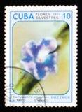 Stachytarpheta jamaicensis, Dzikich kwiatów seria około 1974, Obrazy Stock