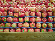 Stack of Apple on Fruit Shelf Stand with Wood for Copy Space at. Stack of Apple on Fruit Shelf Stand with Wood Copy Space at bottom royalty free stock photos