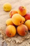 Stack of apricots on jute background Stock Photography