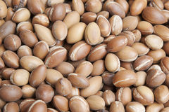 Stack of argan fruit at the local Moroccan markets, Marrakesh, Morocco. Horizontal background shot of argan fruit, the most valued crop of Argania spinosa, or Royalty Free Stock Image