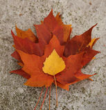 Stack Of Autumn Leaves Stock Photography