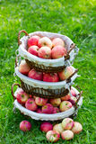 Stack of baskets with apples Stock Photography
