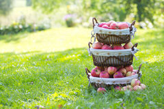 Stack of baskets with apples Royalty Free Stock Photo