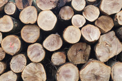 Stack of beech logs in closeup Stock Photo
