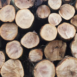 Stack of beech logs in closeup Royalty Free Stock Image