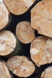 Stack of beech logs in closeup Stock Images