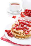 Stack of belgian waffles with red currants and powdered sugar Stock Photography