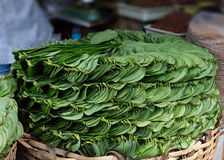 Stack of Betel leaves (Piper Betle) in old town Bangalore. Royalty Free Stock Photo