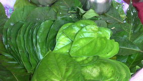 Stack of Betel leaves (Piper Betle) in plate , Mumbai market, India stock footage
