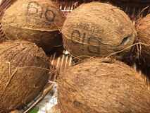 Fresh coconuts for sale. Stack of biologic coconuts displayed on a farmers´ market stall royalty free stock photo