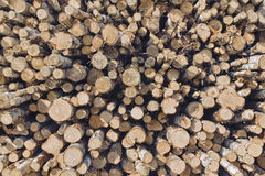 Stack of birch tree logs Royalty Free Stock Photography