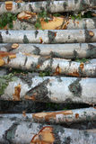 Stack of birch trees Royalty Free Stock Photography