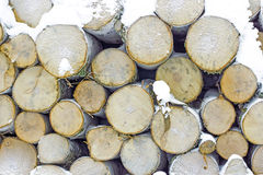 Stack of birch wood Stock Photo