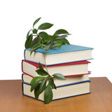 A stack of books with a curling flower. On the table Royalty Free Stock Photos