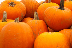 Stack of Bright Orange Autumn Pumpkins royalty free stock photo