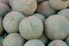 Stack of cantaloupe melons Stock Image