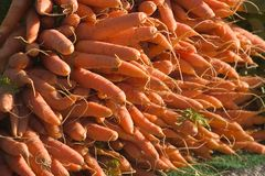 Stack of Carrots. A stack of organic carrots at a street market in California royalty free stock photo
