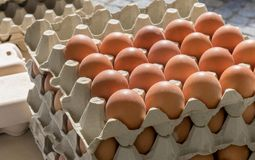 Egg cartons with eggs. Stack with cartons and fresh, brown eggs Stock Photos