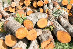 Stack of Cedar Timbers, Felling of Trees Royalty Free Stock Photo