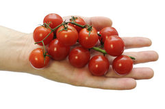 Stack of cherry tomatoes in the hand Royalty Free Stock Photo