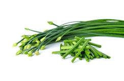 Stack Chives flower or Chinese Chive on white. Background stock photo