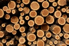 Stack of Chopped Fire Wood Stock Photography