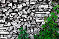 Stack of chopped firewood with green grape leaves Stock Photography
