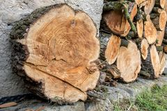 Stack of chopped firewood. Heap of wood logs ready for winter. Stack of chopped firewood. A pile of woods in the house storage. Raw barked wood logs in a Royalty Free Stock Photo