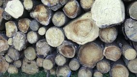 Stack of chopped firewood. Freshly chopped tree logs stacked up on top of each other in a pile. Timber industry stock footage