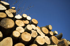 Stack of chopped logs Royalty Free Stock Photos